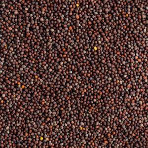 shemins black mustard seeds